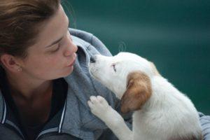 Hobbyhundezucht: Kann man damit wirklich Geld verdienen?