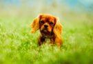 Hundezucht: Selbstständig machen als Hundezüchter?